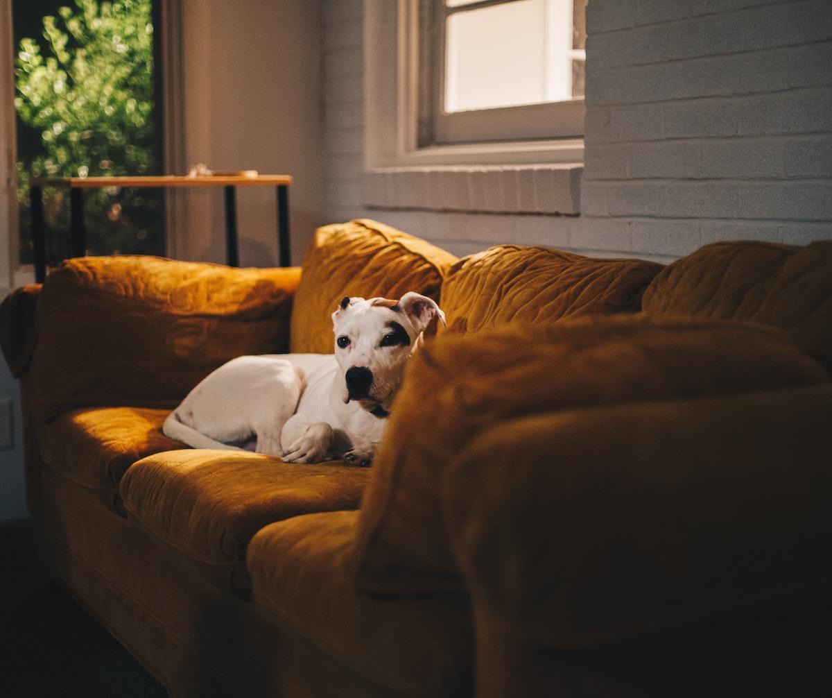 foto perros confinamiento